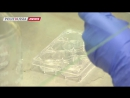 Российские ученые провели успешную трансплантацию щитовидки напечатаной на 3D биопринтере