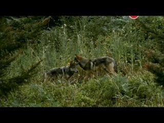 BBC: Животный интеллект: Органы чувств / 1 серия