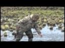 Охота на селезня с подсадными утками и духовыми манками