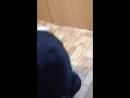 Video ff309d8afa97f9f8be13d6d29ebcf9b6edf388c9d782dc79b3190e2c90f2124b V