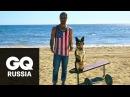 Бой с весом собака делает жим от груди на пляже