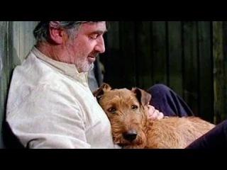 Приключения рыжего Майкла - детское кино про собаку