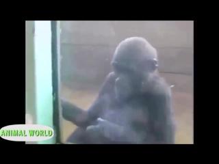 Видео приколы про животных 2015. Игры детей с животными через стекло