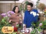 Сад у дачи - уход за орхидеями