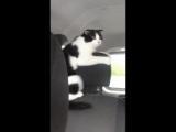 Когда впервые поехал в машине