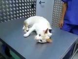 Как очень быстро усмирить кота