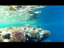Sharm el Sheikh Ras Mohammed Snorkling GoPro HD2