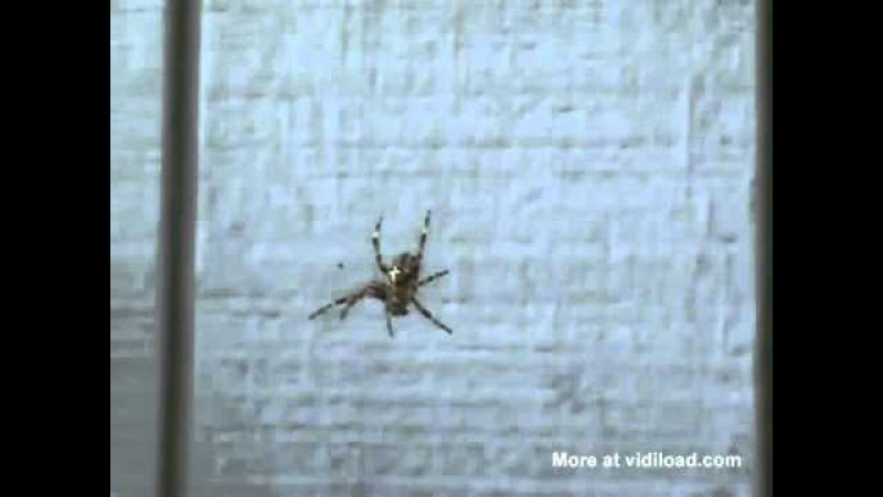 Spider Roar