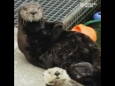 Looks like Selka the sea otter is having a pawesome day!