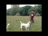 Апорт - Дрессировка собак дома с нуля - игра Принеси Палку