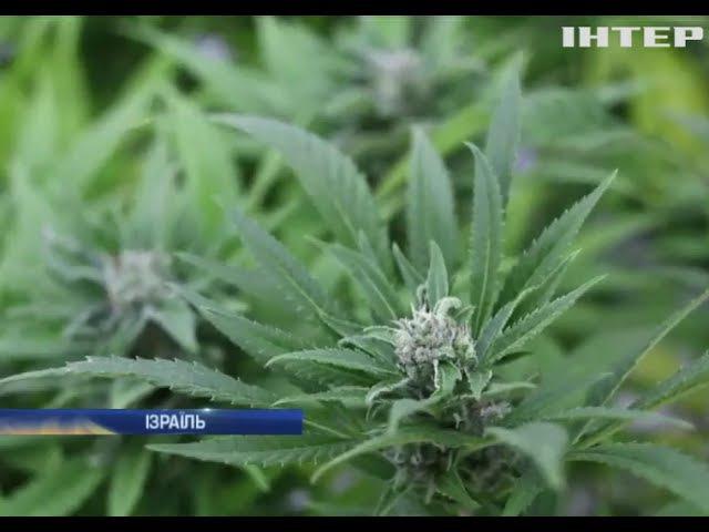 В Ізраїлі людей заохочують лікуватися марихуаною
