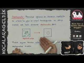 Hücre Zarı ve Zardan Madde Geçişleri - Osmoz