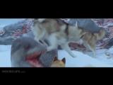 Белый плен (2006) - ТРЕЙЛЕР [720p]