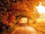 Осень... Дарите Вашу грусть. Елена Решетняк.