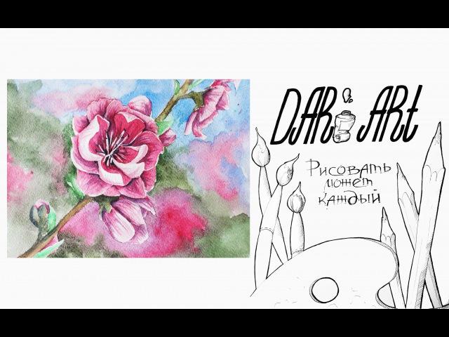 Как нарисовать цветы сакуры акварелью! Dari_Art рисоватьМОЖЕТкаждый