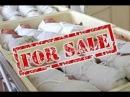 Торговля детьми Интересный Документальный фильм из серии Очная ставка