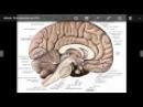 Glândula Pineal CONHECIMENTO