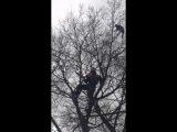 Спасатели снимают кота с дерева Крым Симферополь