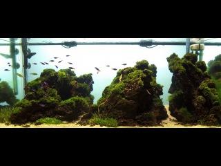 Iceland Aquascape 150 Liter Planted Aquarium 2016