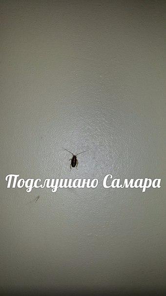 Тараканы в Больнице им.Пирогова !  Прошу любить и жаловать !!!!!!!