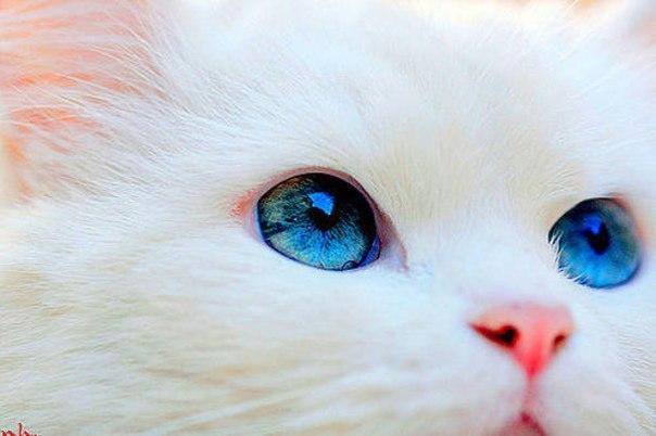 Уход за котенком - Всё о кошках и котах