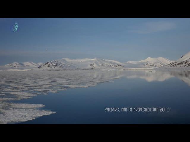 Песня белух (арктические белые киты) в Шпицбергене