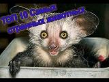 ТОП 10 Самых странных животных
