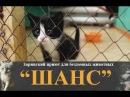 4 минуты из жизни Заринского приюта для бездомных животных ШАНС Заринск в Ютубе