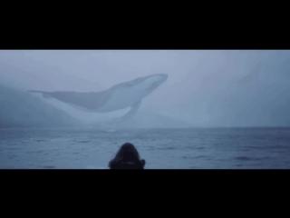 Летающие киты в горах Шотландии
