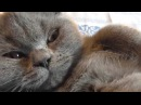 Котик для поднятия настроения