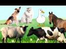 Мультики для самых маленьких. Домашние животные папы, мамы и малыши. Животные дл...