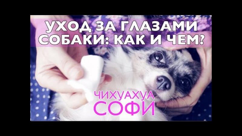 Как и чем промыть глаза собаке | Чихуахуа Софи