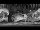 Острорылый крокодил Голиаф - убийца аллигаторов