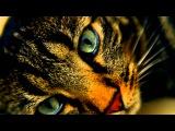Cats Aren't Disposable Телефон можно выбросить. Кот это обязательство на всю жизнь.