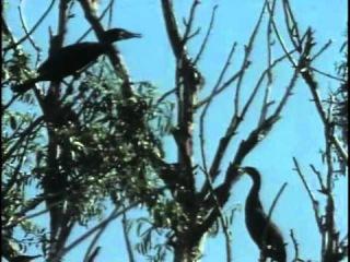 39 - Одиссея Жака Кусто - Дунай - YouTube