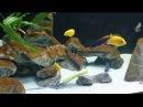 Бурый налет(диатомовые) и проблема молодого аквариума