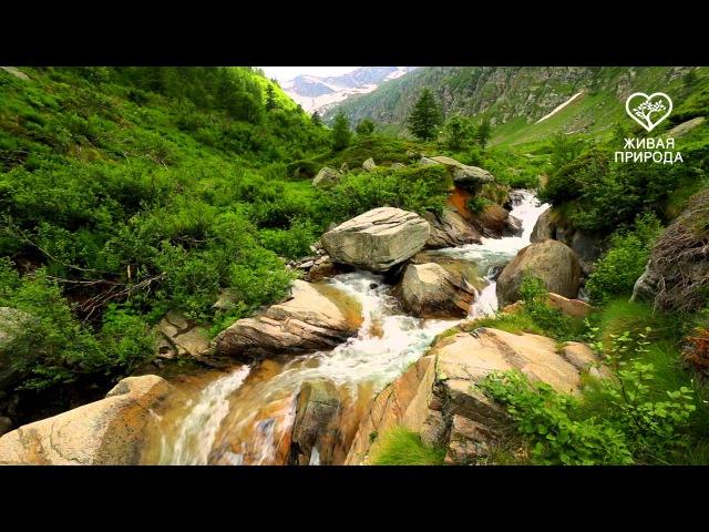 Национальный парк Гран Парадизо. Италия.