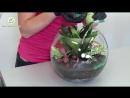 Как сделать Флорариум из комнатных растений. Мастер класс практической флористики.