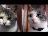 Животные до и после приюта