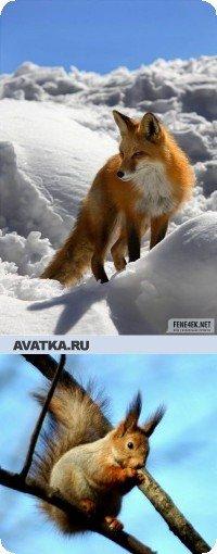 Лисичка Бельчонок, 18 апреля , Новосибирск, id25598580