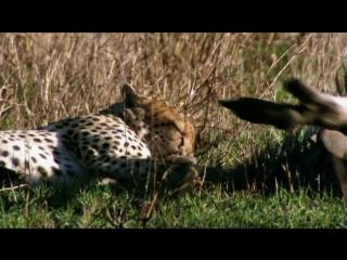 Большие птицы с Дэвидом Аттенборо  BBC Natural World Attenboroughs Big Birds (2015)