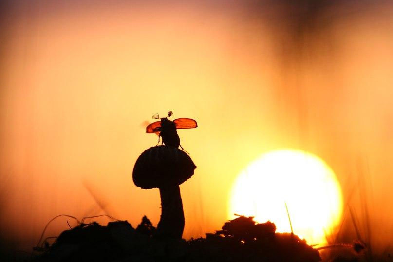 FQs gaRjjS0 - 15 фотографий - 15 чудес природы