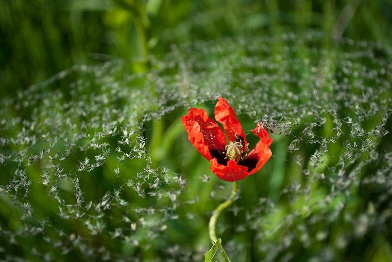 YOTEmaNm7lo - 15 фотографий - 15 чудес природы