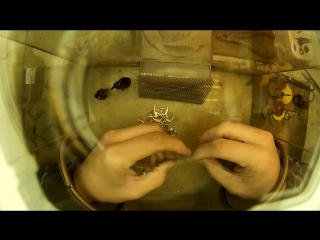 Сборка серёжек. Сжато, пара этапов) #gold #jewellery #деньювелира #videooftheday 💍👍✌