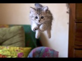 Funny Cat & Cute Kittens Fail Videos   The Best Funny Kitty Cat Video № 20  |  Morsomme Katter № 20