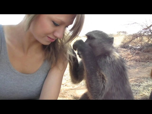 Being groomed by Shauna the baboon