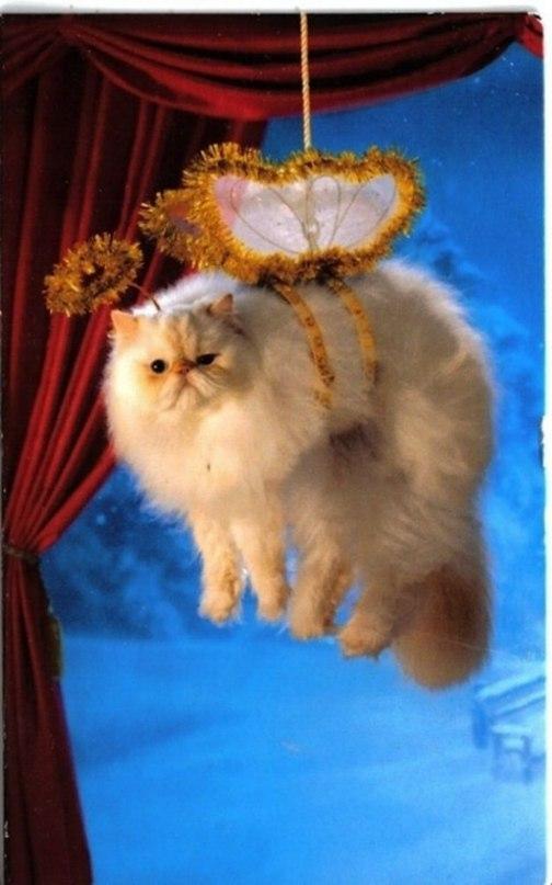 gQE64onpEUE - Как нарядить кота на Новый Год? (ФОТО)