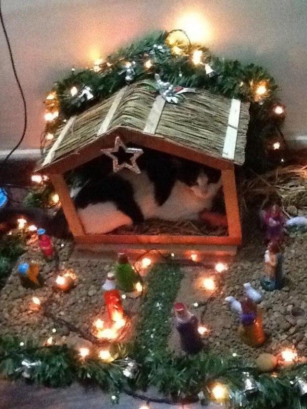 1c4bZ1mD8Rk - Как нарядить кота на Новый Год? (ФОТО)