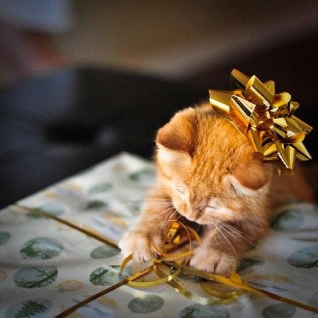 rvZ4oO4AyRw - Как нарядить кота на Новый Год? (ФОТО)