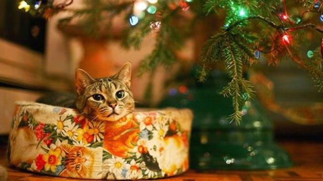 0i2jxBpVMwc - Как нарядить кота на Новый Год? (ФОТО)